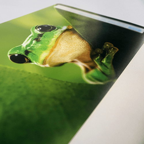 A poster with an image of a frog